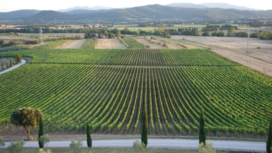 tuscan wine hholiday