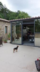 Rubinon viinitilan koira Rubino